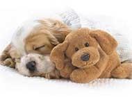 超可爱狗狗睡梦中唯美图片
