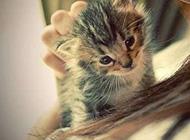 超可爱小猫小狗卖萌精美图片
