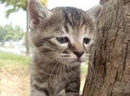 小狸花猫忧郁逗趣表情图片
