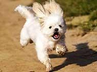 奔跑的动物高清唯美图片