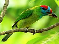 可爱的啄木鸟医生图片