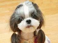 超级婌女的小狗狗