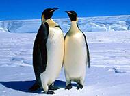 企鹅兔子可爱动物图片合集