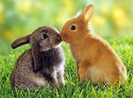 可爱萌宠高清动物图片