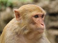 可爱机灵猴子高清摄影图片