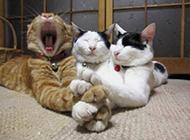 一家猫咪面对镜头都无视的表情