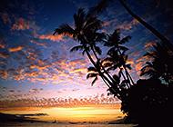 海滨沙滩椰林晚霞美景图片