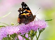 春天公园鲜花上的蝴蝶图片大全