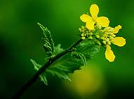 绿色植物风景图像精美高清