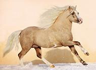 奔腾的骏马高清壁纸写真