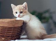 唯美可爱小花猫高清图片