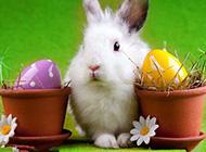 可爱兔子卖萌搞怪图片
