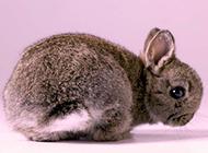 惹人喜爱的小兔子高清桌面壁纸