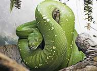 绿色传奇 鬼蛇魅影