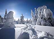 粉妆玉砌雪景高清壁纸