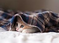 萌猫咪图片睡觉可爱素材