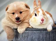 慵懒胖嘟嘟的宠物小狗图片