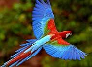自由翱翔 鸟的世界