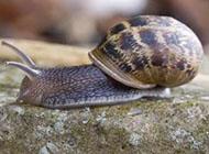 清新好看的蜗牛摄影图片