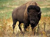 大自然中有趣的动物高清图片