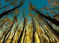 浪漫的秋天黄昏树林摄影图片壁纸