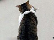 猫咪搞怪图片之真的喜欢你