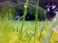 漂亮的夏日清晨植物上的露珠摄影图片