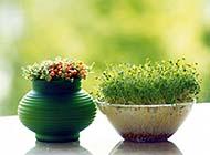 绿色植物护眼高清桌面墙纸大全