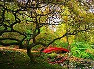 郁郁葱葱的树木高清图片