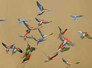 色彩炫丽的金刚鹦鹉高清组图