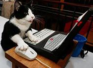 恶搞动物上网