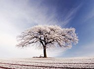 冬天冰山雪花世界风景壁纸