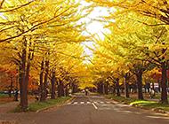 高清唯美日本札幌风景图片