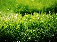 春天的田野优美大自然图片