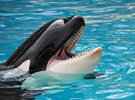 可爱鲸鱼微笑甜美图片
