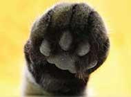 萌萌的可爱猫爪姿态拍摄图片