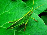 精灵般的昆虫高清摄影图片