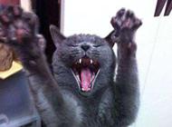 猫咪搞笑表情的图片之太棒了