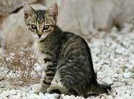 萌态可爱小猫咪图片