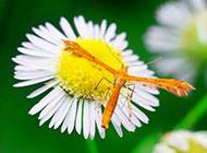 夏天的昆虫图片微距摄影作品