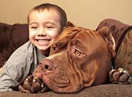 大型比特犬狗狗和宝宝图片