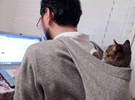 二货猫咪图片之我陪你加班