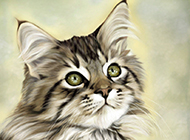 缅因猫精美素描图片