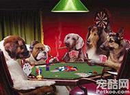 一群迷上了赌博的狗狗