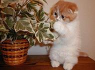 经典可爱小喵猫写真集
