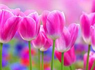 小清新花卉美景壁纸赏析