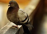 捕捉温馨静谧小动物摄影组图
