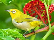 叽叽喳喳的小鸟高清桌面壁纸