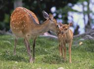 网友提供自然界的动物--鹿