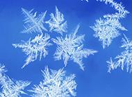 绝美雪花美景高清风景壁纸